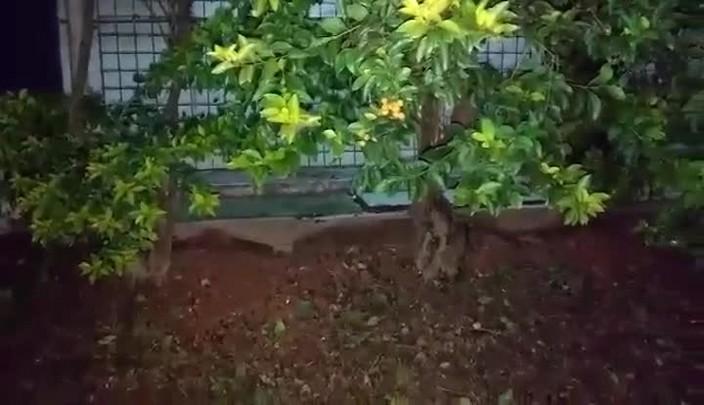 Morador registra ratos no estacionamento do PA Sul de Joinville