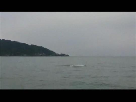 Leitor flagra baleias em Barra do Sul