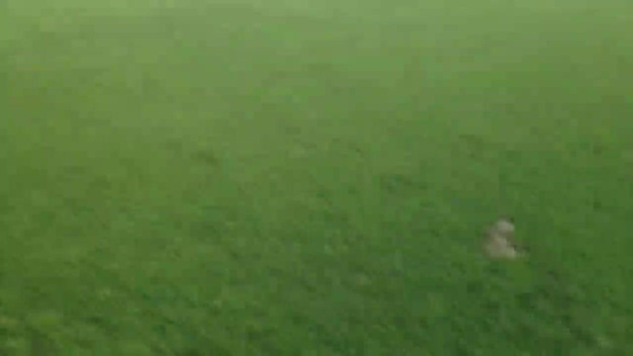 Gramado do Estádio do Vale não está nas melhores condições - 12/09/2013