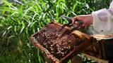 Produtores e universidades juntos pela preservação das abelhas