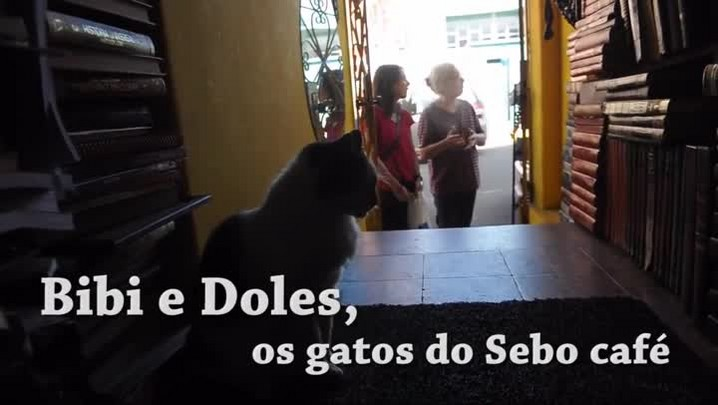 Meu Pet é Pop: Bibi e Doles, os gatos do Sebo Café