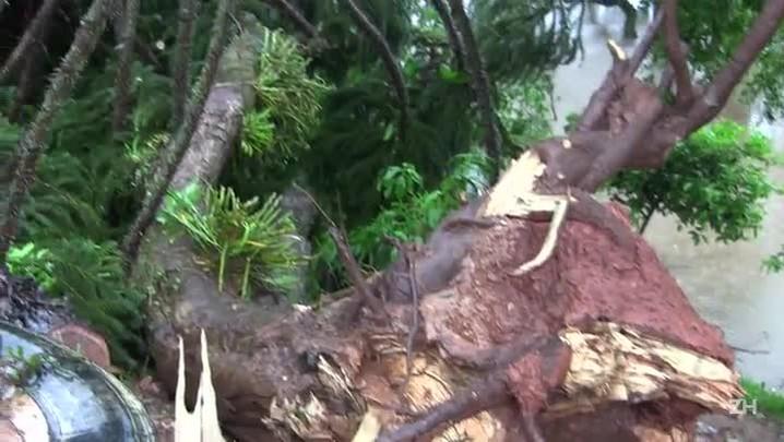 Mãe e filho morrem após casa ser atingida por árvore durante temporal