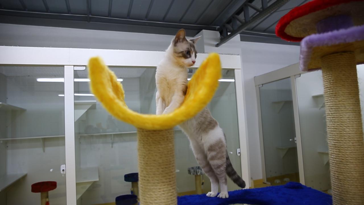 Porto Alegre ganha hotel 5 estrelas para gatos