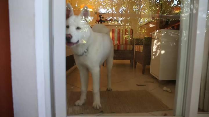 Meu PET no DC #2: cachorro grande e espaço pequeno