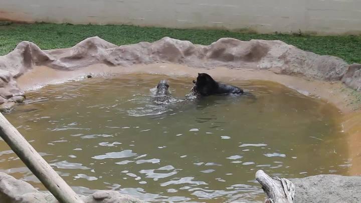 Animais se refrescam no zoológico de Pomerode