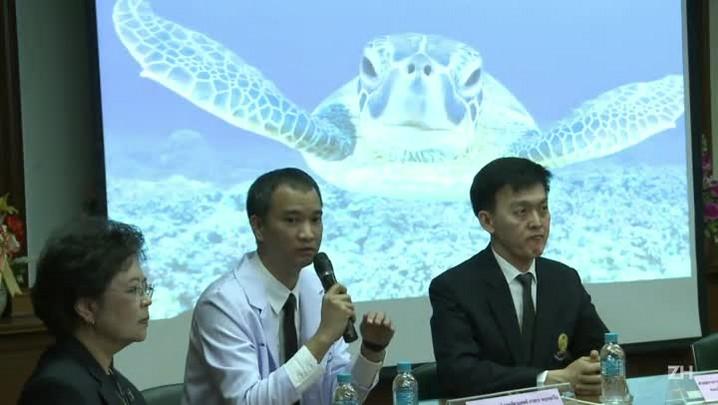 Morre tartaruga que ingeriu 915 moedas