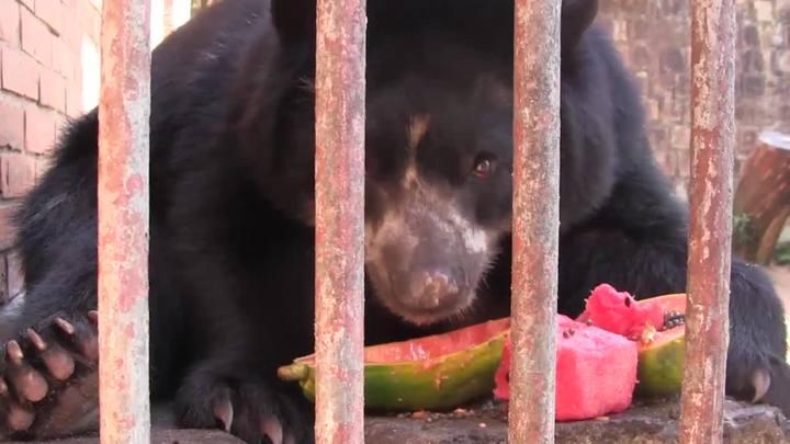Como são tratados os animais que vivem no Zoológico de Sapucaia do Sul