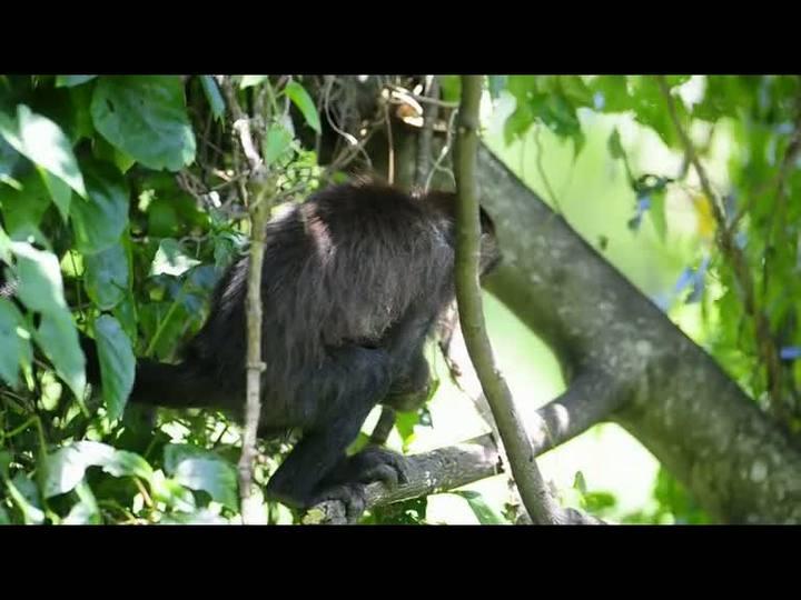 Macacos pregam peças em visitantes em Passo de Torres (SC)