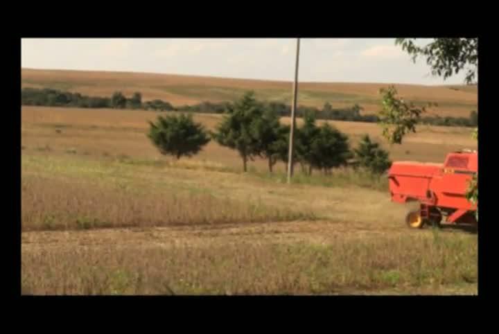 O celeiro da soja no Estado