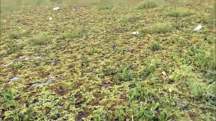 Moradores criam equipamento para limpar a Lagoa do Cocão, em Alvorada