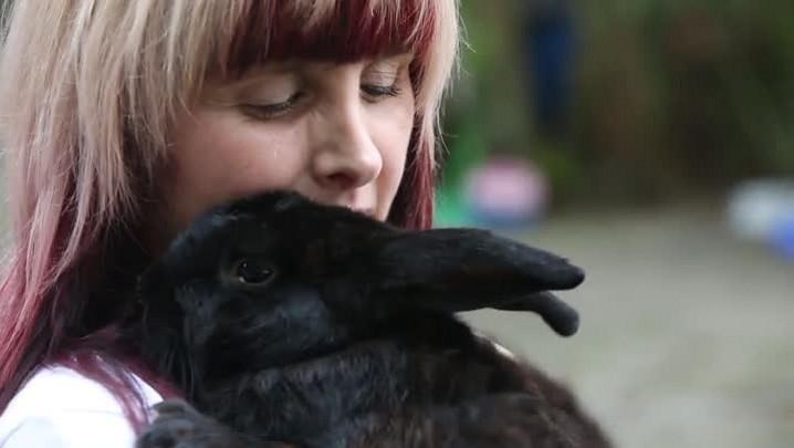 Meu PET no DC #8: adote um coelhinho
