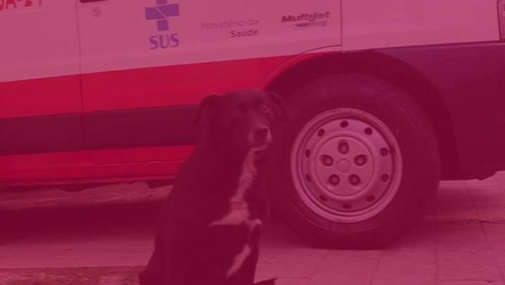 Meu Pet é Pop: Preta, a cadela do SAMU