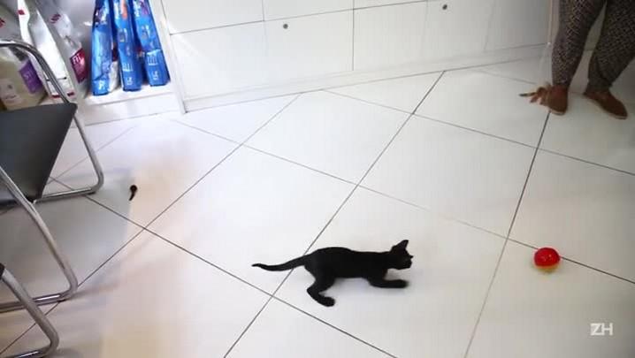 5 dicas para brincar com gatos e prevenir a obesidade