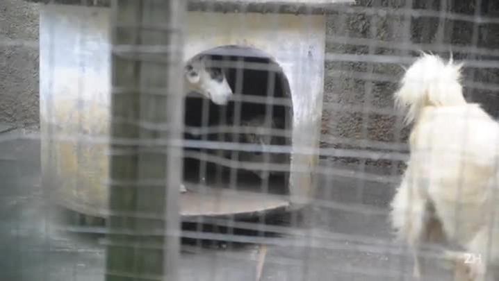 Aposentada abriga mais de 40 cães abandonados