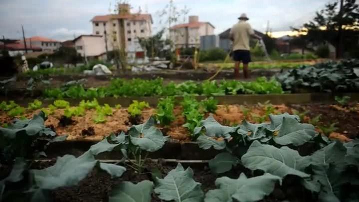 Conheça um pouco mais sobre a horta comunitária do bairro Costa e Silva
