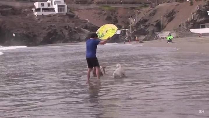 Otto, o cão skatista