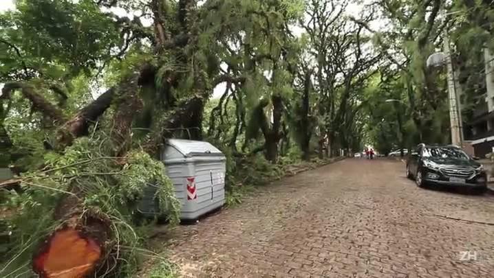 Biólogo explica os impactos das quedas de árvores em Porto Alegre