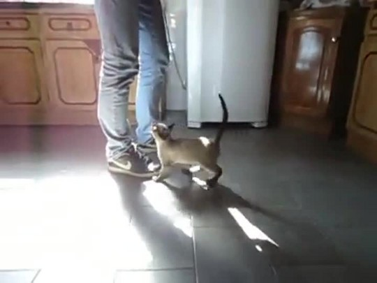 Catarinense grava vídeo de seu gato tomando mamadeira