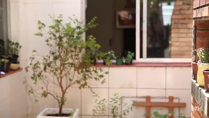 Saiba como montar uma horta em casa