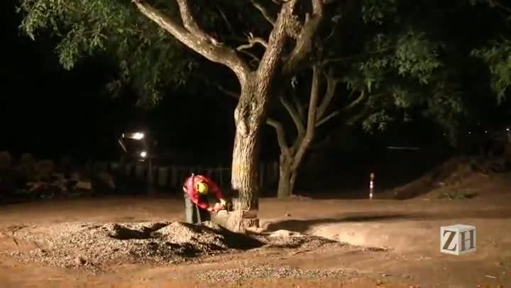 Árvores são cortadas para a duplicação da Avenida Edvaldo Pereira Paiva