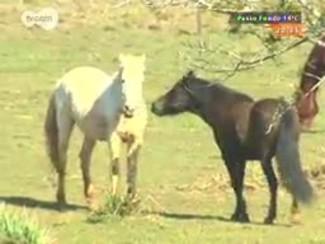#PortoA - Equoterapia: saiba como cavalos podem ajudar no tratamento de pessoas com deficiências ou necessidades especiais