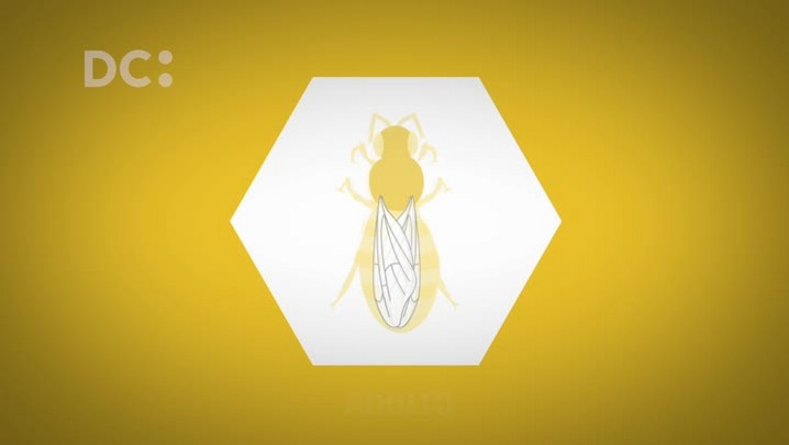 Ciclo de vida das abelhas operárias