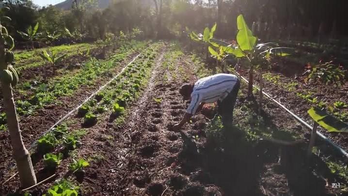 O que é agricultura sintrópica