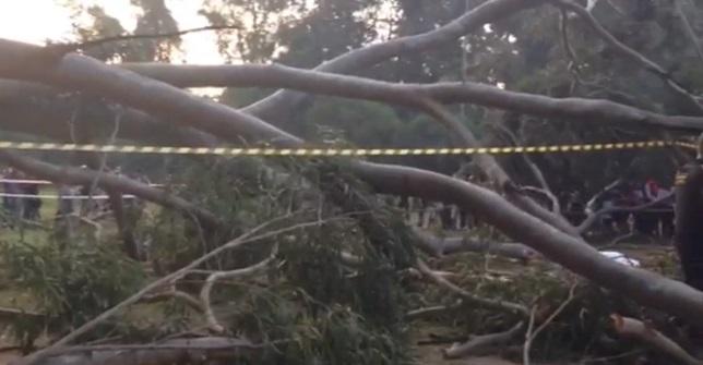 Queda de árvore na Redenção mata idoso e deixa três feridos. 31/08/2013