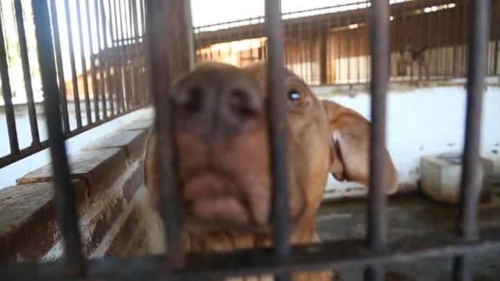Conheça o canil clandestino que abriga 274 cães em Taquari