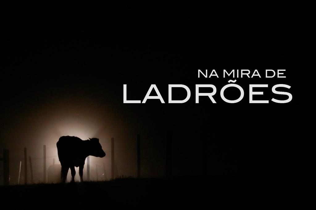 Na mira de ladrões: furto de gado desafia repressão