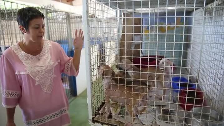 Meu PET no DC especial: desafios do Samuvet, a ambulância de animais.