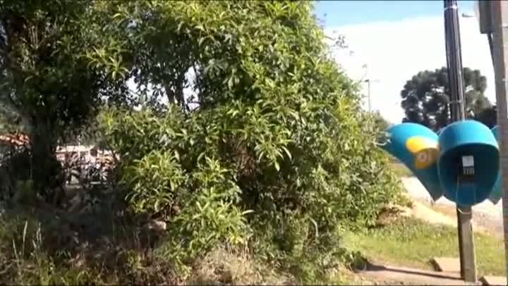 Orelhões instalados em meio a um matagal surpreende moradores de Passa Sete