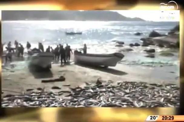 TVCOM 20 Horas - Oito mil tainhas são capturadas na praia de Gravatá - 25.06.15