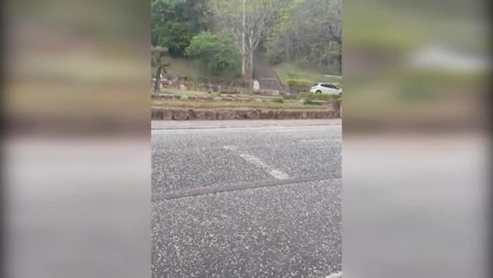 Chuva de granizo em Mata