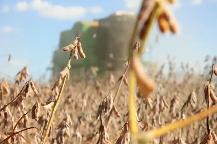 Começa a colheita da soja no Estado