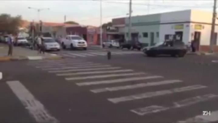 Javali caminha pelas ruas de Quaraí