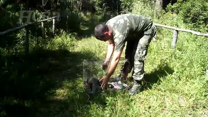 Polícia Militar Ambiental solta na natureza gambás encontrados em restaurante