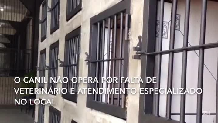 Albergue Municipal de Porto Alegre não recebe animais por falta de veterinário