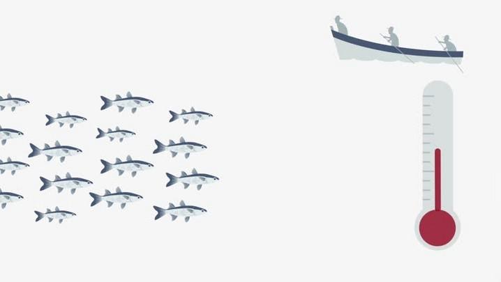 DCexplica: o desequilíbrio na pesca da tainha