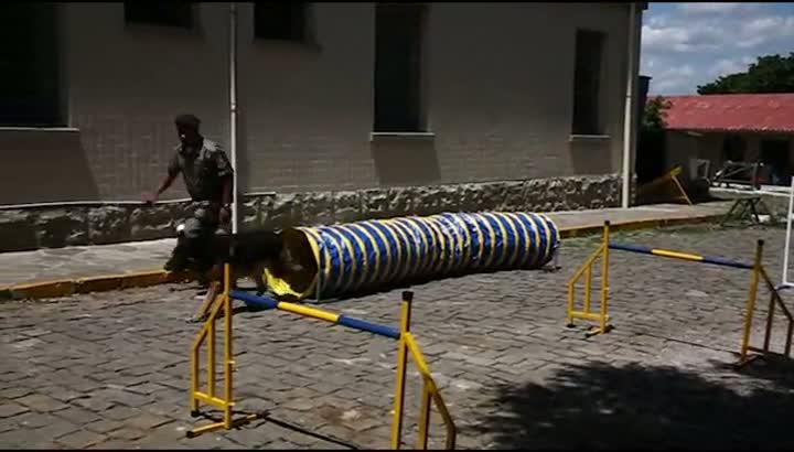 Nova pista para os cães da Brigada Militar em Caxias do Sul