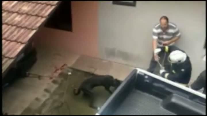 Cão ataca família em Joinville