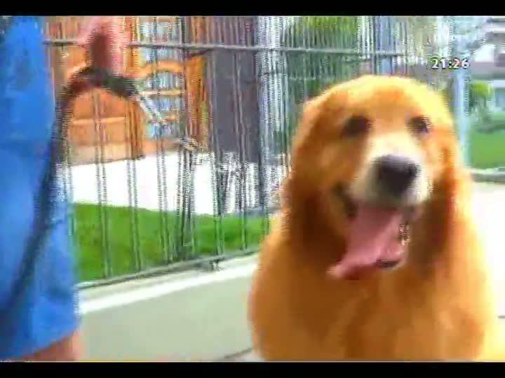 TVCOM Tudo Mais - Passeadores de Cães