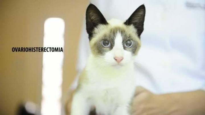 Veja como foi a videocirurgia de esterilização da gata Princesa