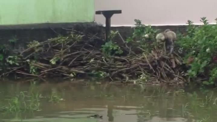 Moradores têm casas alagadas no Campeche, em Florianópolis