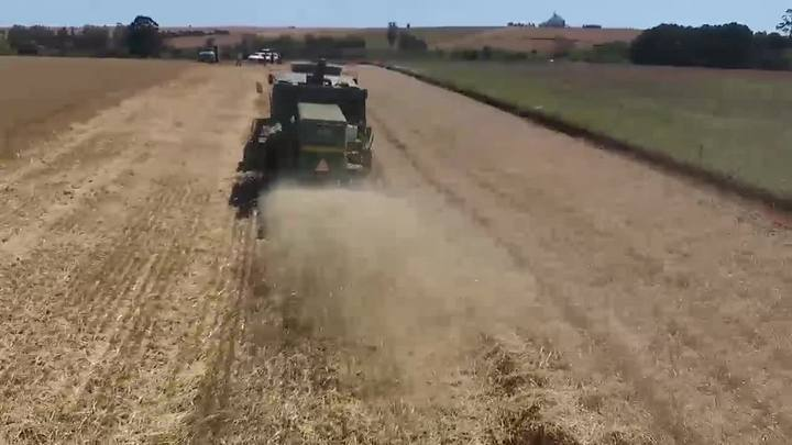 Colheita do trigo avança no Estado