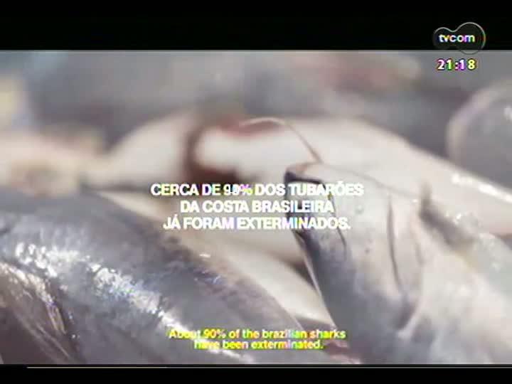 TVCOM Tudo Mais - Extermínio de tubarões