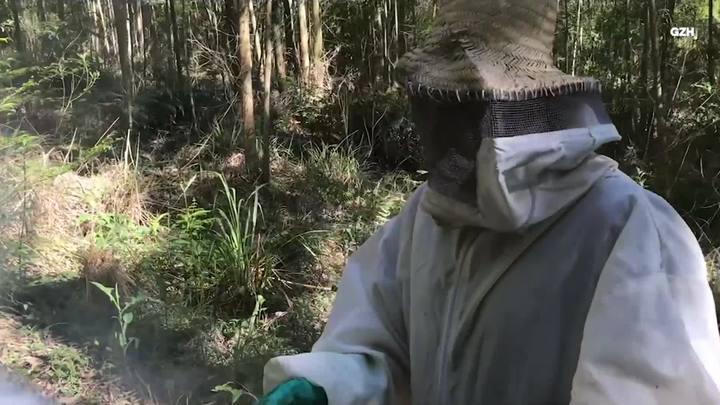 Cuidados no trato com abelhas