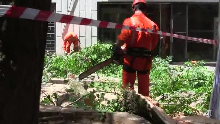 Equipe começa retirada de árvore que desabou no centro de Porto Alegre