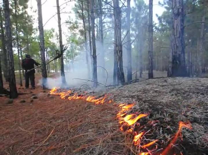 Novos focos de incêndio surgem na vegetação no Moçambique