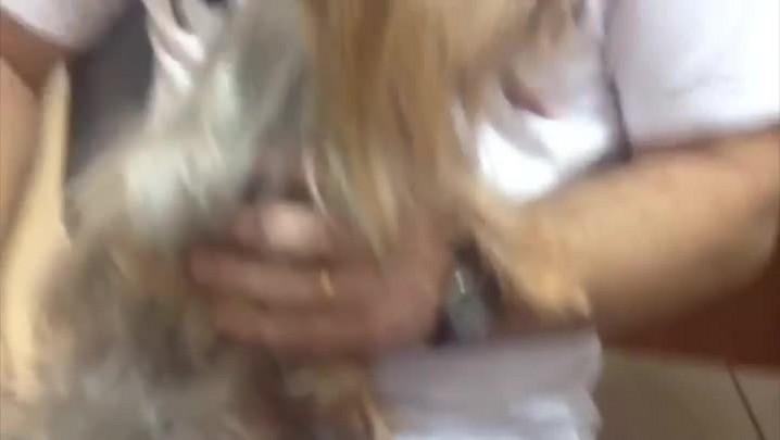 Polícia busca dono de cachorro encontrado com criminosos. 06/05/2014